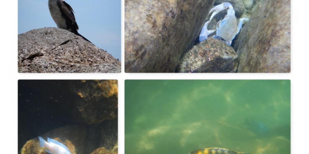 Rosentritt als Schnorchler im Malawisee