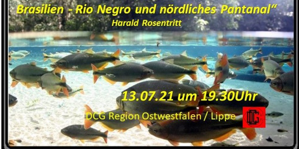 """Videokonferenz Harald Rosentritt """"Mit JBL in Brasilien – Rio Negro und nördliches Pantanal"""""""