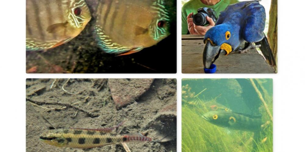 Vortrag: Südamerikanische Zierfische in ihren Biotopen