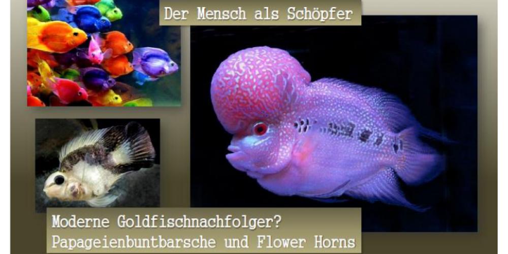 Was einer wollte, was einer hatte, was einer haben wird – Bemerkungen und Betrachtungen zur Aquaristik
