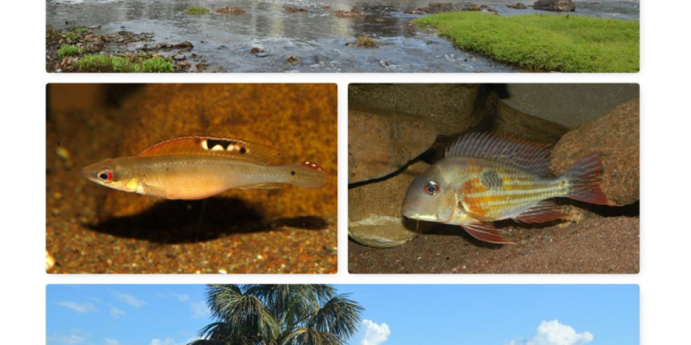 1400 Kilometer Transamazonica: zum Fischfang im Rio Madeira
